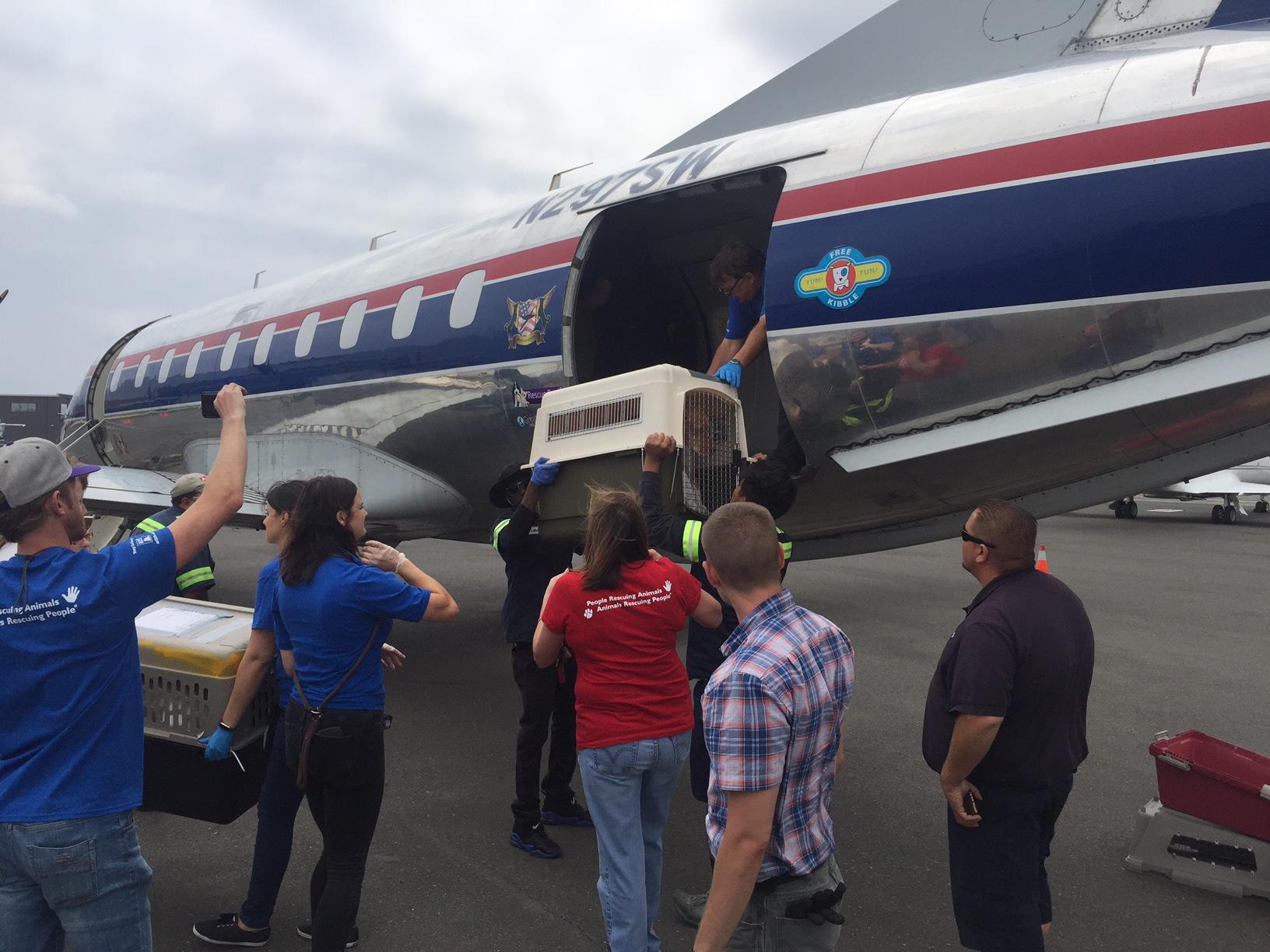 Hurricane Irma Pet Rescue Effort at APP Hayward